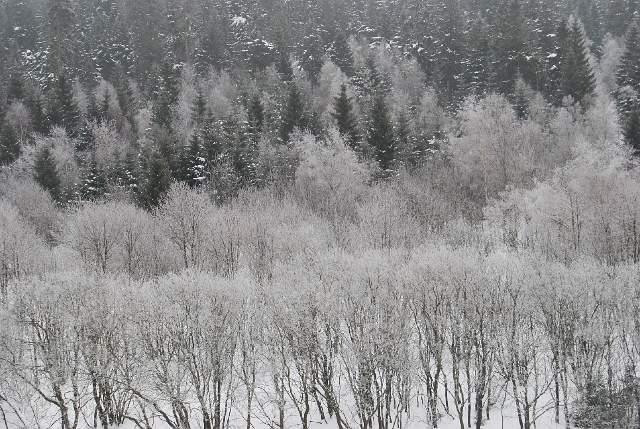 DSC_201304_0002a_Winter